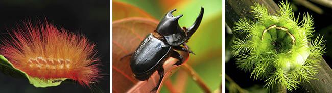 Satipo Selva Central - Mariposas (3)